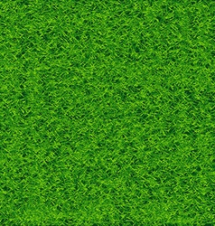 Green Soccer Grass Field vector image