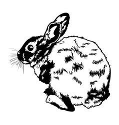 Wild rabbit vector