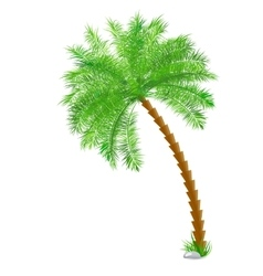 Tropical palm tree over white vector