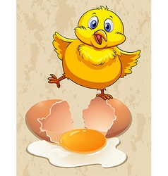 Little chick and raw egg vector