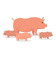 Pigs flat design  on white vector