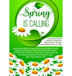 Spring holidays floral banner with daisy flowers vector