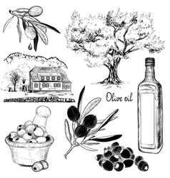 Black and white hand drawn set of olive products vector