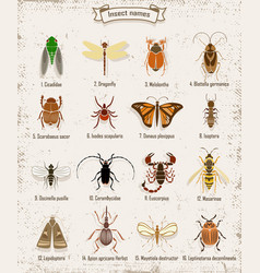 Colorful insects icons set vector