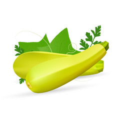 vegetable marrow courgette or zucchini isolated on vector image vector image