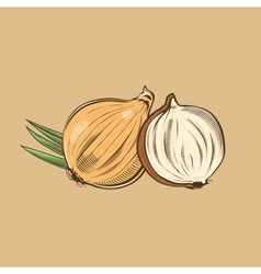 Onion in vintage style colored vector