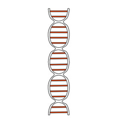 Color silhouette image front view dna molecule vector