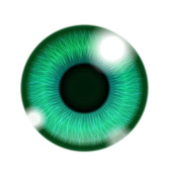 Human green eye vector