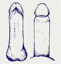 Anatomy of penis vector