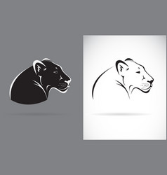 black panther on white background and gray vector image