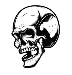 human skull isolated on white background vector image
