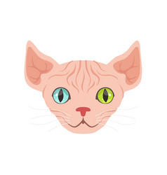 cute sphinx cat with eyes of different colors vector image
