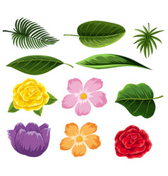 different types of leaves and flowers vector image