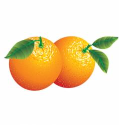 two oranges vector image