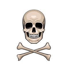 skull with crossbones vector image