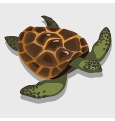 Turtle in a cartoon style closeup vector