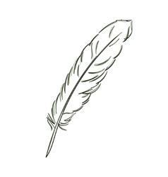 Feather sketch vector image