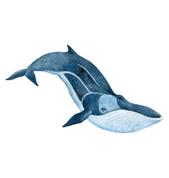 fin whale vector image