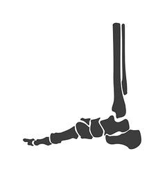 Foot bone anatomy vector