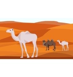 Camel in the desert sand hills dunes animals vector