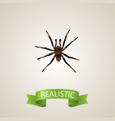Realistic tarantula element vector