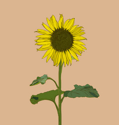 sunflower set of hand drawn sunflowers and leaves vector image