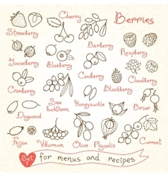 Set drawings of berries for design menus recipes vector