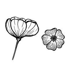 Ink flowers vector image vector image