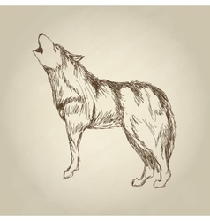 Wolf design animal conceptwildlife animal vector