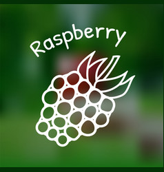 thin line raspberry icon vector image vector image
