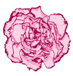 Clove flower with rose petals and pink edging vector