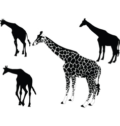 Giraffe collection - vector
