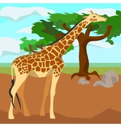 Giraffe on background trees animals and nature vector
