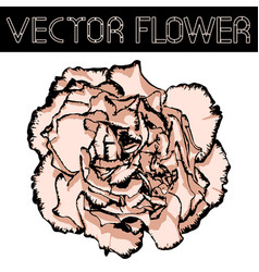 Clove flower with beige petals and black edging vector