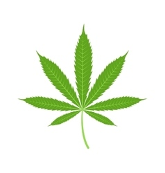Cannabis marijuana leaf icon vector