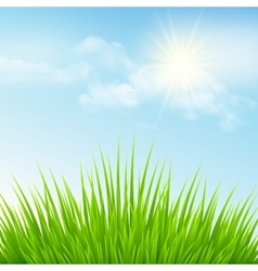 Green grass and blue sky vector image vector image
