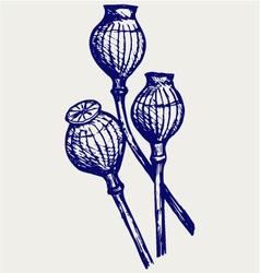 Opium poppyhead vector