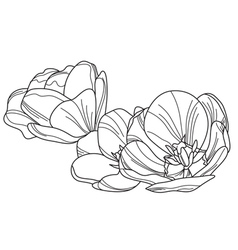 decorative tulips vector image