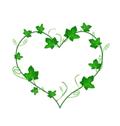 Green ivy leaves in beautiful heart shape vector