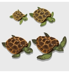 Group of turtles in a cartoon style closeup vector