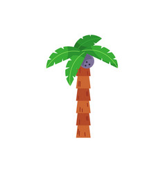 Single one coconut palm tree with straight stem vector