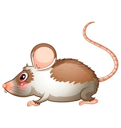 A side view of a rat vector image