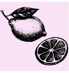lemon with leaf vector image