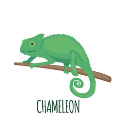 Cute green chameleon in flat style vector