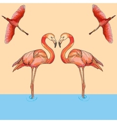 Flamingos in flight and water vector