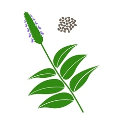 Chia branch and chia seeds vector image