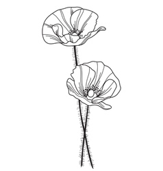 decorative poppy vector image vector image