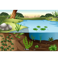 A pond ecosytem vector