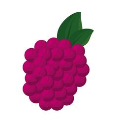 isolated sweet blackberry vector image