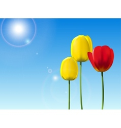 Red and yellow tulips on a blue sky background vector image vector image